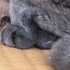 猫が前の手を90度に曲げてる写真。