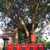 ランソンのキークン川・キークン寺(DEN KY CUNG / KY CUNG TEMPLE)
