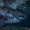 Ark攻略 恐竜紹介 水棲生物のメガロドン、イクチオ、エラスモサウルスをテイム