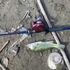 雄蛇ヶ池 おかっぱり バスパラフリダシ ウォーターソニック ジグスピナー