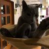 猫さんとイチャイチャするしかない毎日の話。