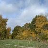 深まる秋の森を散歩