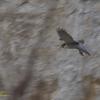 3連休の鳥撮り