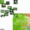 (めだか)(水草)黒メダカ初心者セット 黒メダカ(10匹) + おまかせ浮き草3種セット