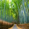 ようやく100記事到達したし、京都に住むし≪雑談≫