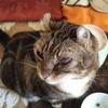 2度の縫合手術むなしく目が悪化した猫 そして大きな決断