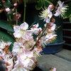 馥郁と花咲き誇る庭
