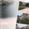 弘前城外堀の花筏