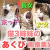 猫3姉妹が「あくび」している画像を貼っただけ!【猫のあくび】