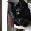 今日の黒猫モモ&白黒猫ナナの動画ー1044