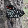 「愛蝶家」という名の・・・