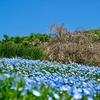 昭和記念公園の花々。