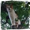 天国へ旅立った愛する猫【わーすけ】への手紙【番外編】