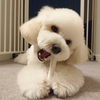 ~愛犬の好きなおもちゃをみつけよう~