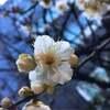 春の香り  ほっこり