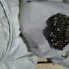 【蜂の巣駆除からマナブ】