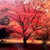 美しい紅葉は世界共通のようです