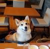 レジーナリゾート軽井沢御影用水(3)お食事編(犬との宿泊 感想ブログ)