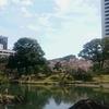 本日も都内の桜の名所を巡ってまいりました