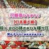 『可睡斎ひなまつり』日本最大級、32段1,200体のおひな様が圧巻!!男の子ママにもおすすめ
