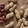 【ピーナッツ】すんごいパワー、再発見!