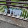一ノ橋の藤棚…