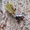 生き物散歩 ぐんま昆虫の森 その1 樹液酒場と昆虫観察館