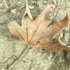 季節外れの落ち葉から始まるとりとめのない写真〜そして謙虚さについて