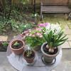 雨上がりの庭と、今日のオヤツと夕ごはん
