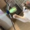 猫ちゃんの抜け毛対策見つけたり!!我が家のお猫様ひま日記8