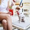 """あなたの愛犬は、""""どこでも""""おすわりできますか?〜犬の『弁別性』〜"""