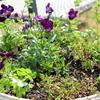 園芸ブログでもありますが…。