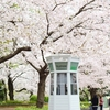 2017年の桜は、異世界につながる電話ボックスとともに。