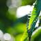 栗の実落とし一人きり 青葉にふわり触れる木漏れ日