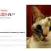 本日のスペシャルポスター(2016年7月1日)