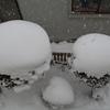 雪まんじゅう…