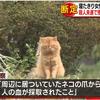 先月熊本で発生した殺人未遂事件は野良猫によるものと警察が断定!!その猫は殺処分されちゃうの!?
