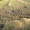 稲刈り後の風景と籾殻