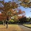 澄んだ空に秋色が映えます。