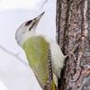野鳥を撮りたい!