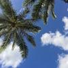#0 ハワイ旅行記 2017年2月の旅定を公開