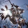飛鳥山公園〜スカイツリー