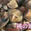 桃の節句前にハマグリ漁 有明海(熊本県)
