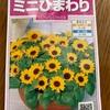 7月にタネをまける花たち✨