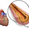 【心臓の健康】生活習慣からくる心臓病へのリスクと予防・対策法まとめ