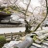 地元の桜めぐり「天野山 金剛寺」 Ⅱ