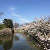 松本城の桜、2017春🌸