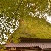 かやぶき屋根と緑の紅葉