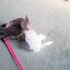 掃除中の小鳥様