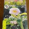 趣味の園芸2月号「一鉢で自然とつながるミニ盆栽」